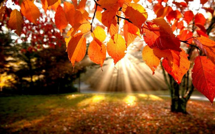 Fall-Foliage-Wallpaper-0