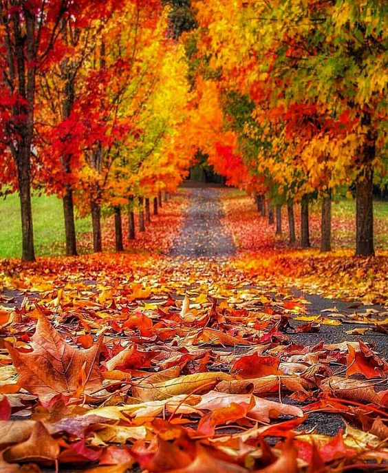 road-leaves