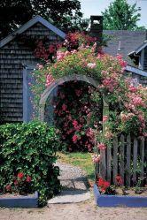 rose entry